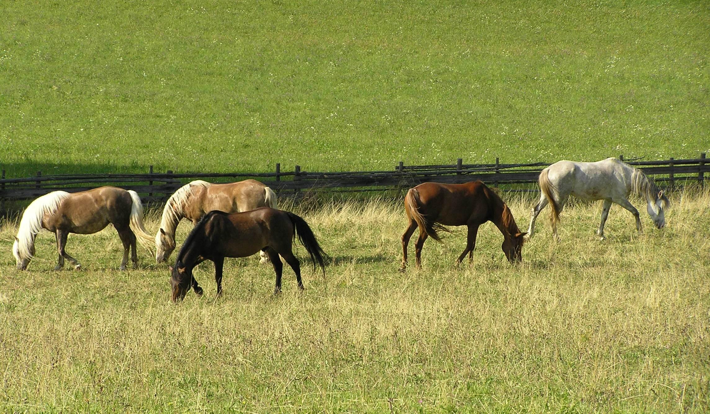 Unsere Pferde Urlaub Am Bauernhof Bei Familie Mikl